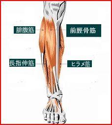 すねの筋肉1.jpg